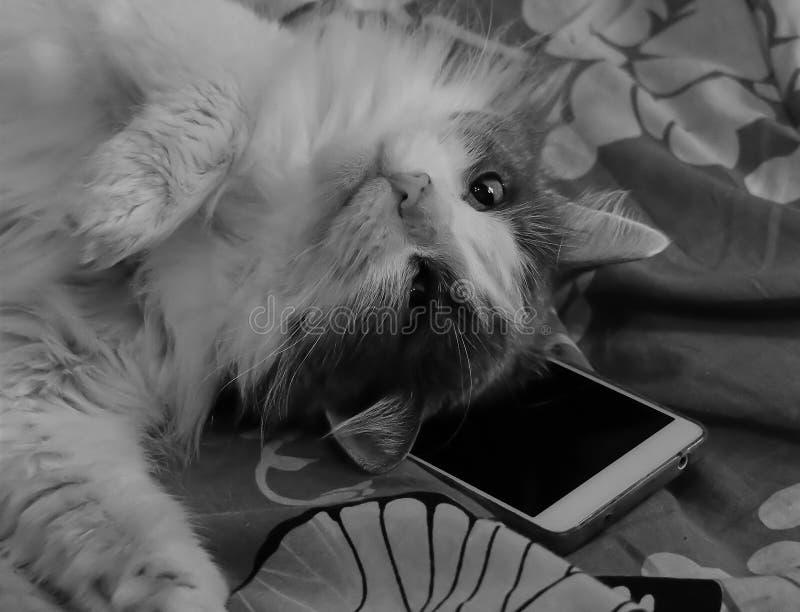Svartvit bild av en katt som spelar med en smartphone på sängen arkivfoton