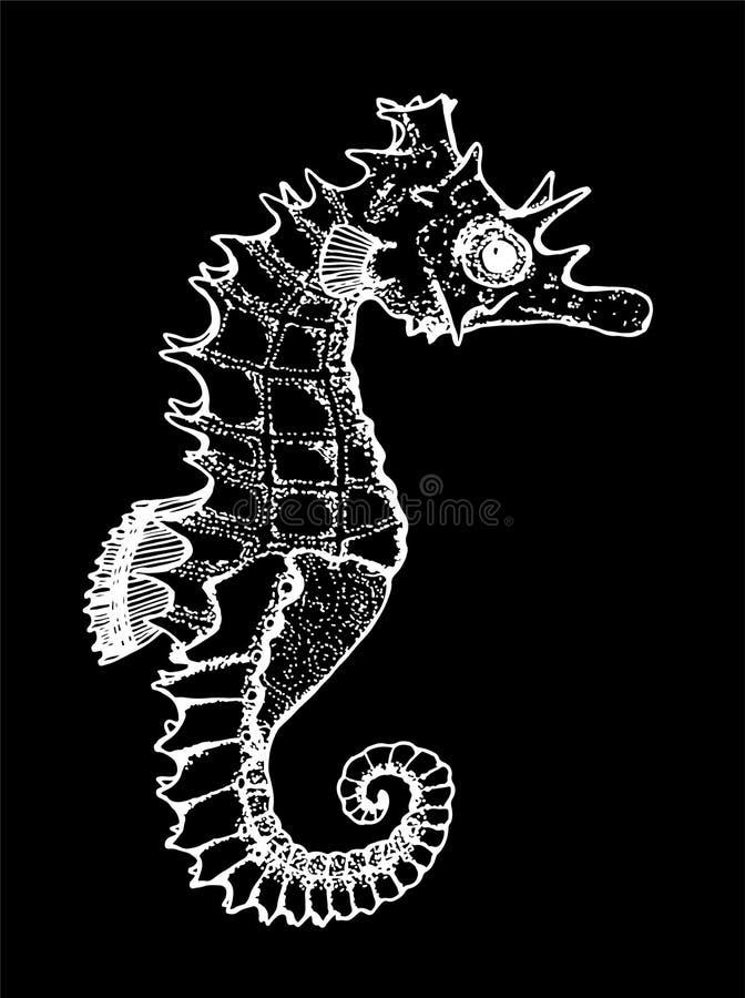 Svartvit bild av ett havsdjur Diagram seahorse Krita p? en blackboard vektor illustrationer