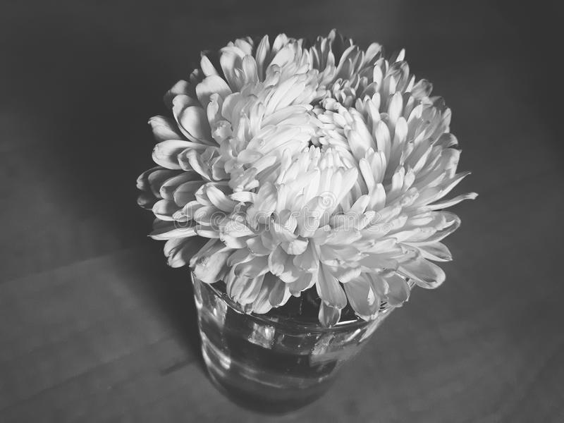 Svartvit blommasingel royaltyfri fotografi