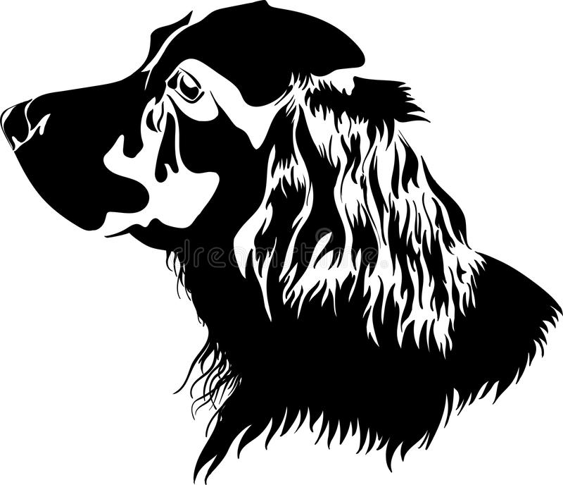 Svartvit hundspaniel arkivfoto
