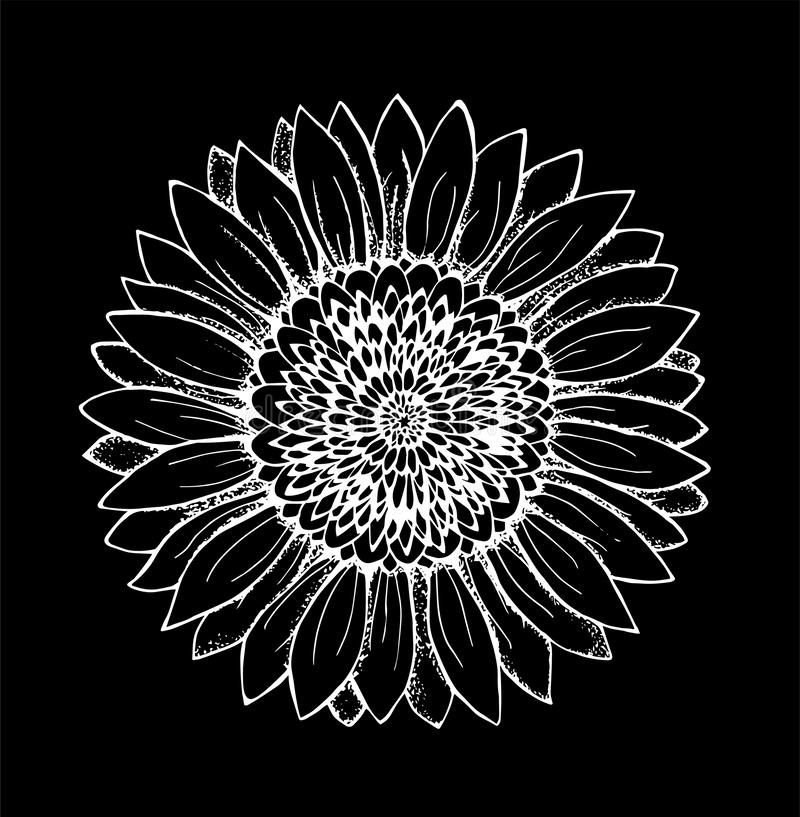 Svartvit illustration av en solros den abstrakt blommaillustrationen f?r kortet etc Krita p? en blackboard royaltyfri bild