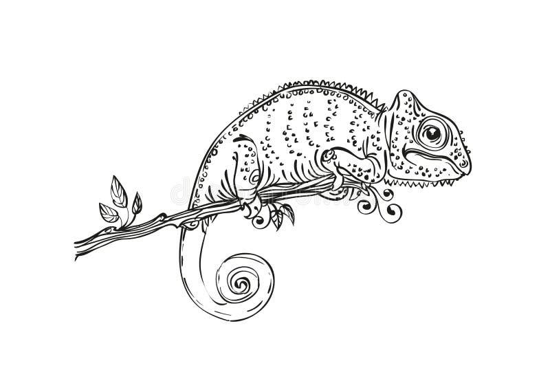 Svartvit illustrationkameleont stock illustrationer
