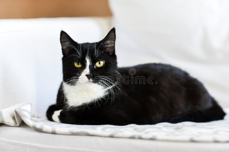 Svartvit inhemsk katt, ligga hemma, koppla av och stillhet royaltyfri foto
