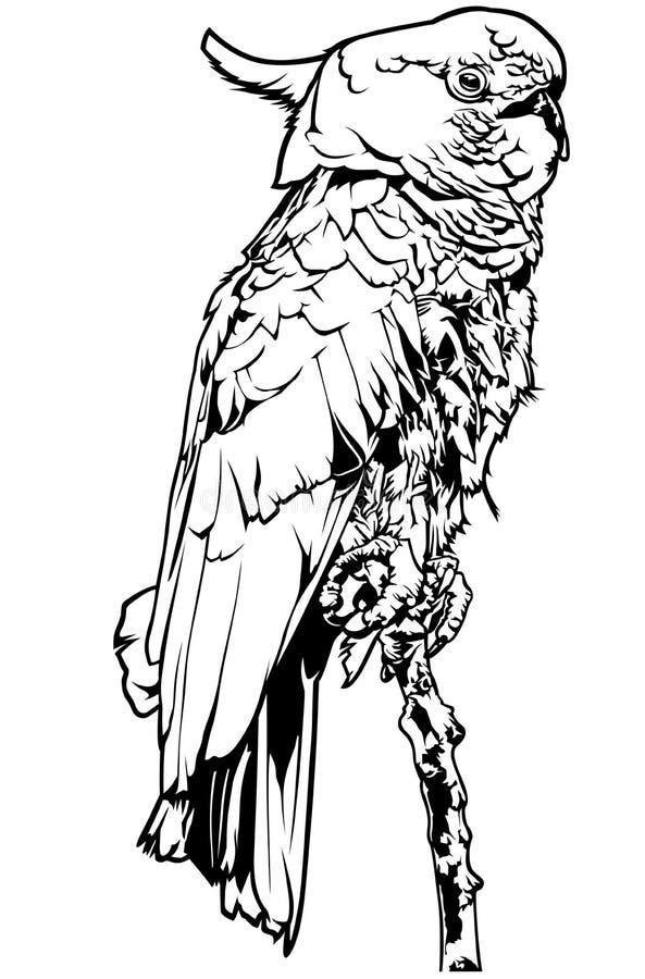 Svartvit kakadua stock illustrationer