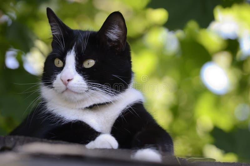 Svartvit katt på taket royaltyfri foto