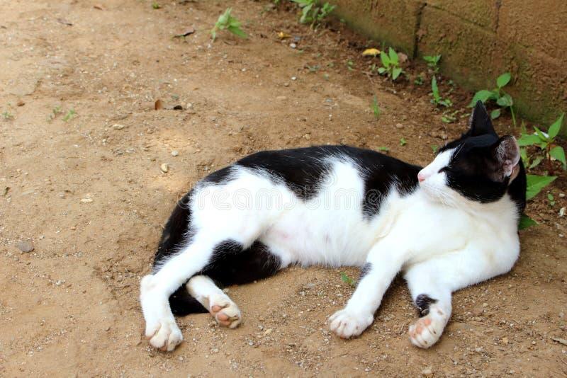 Svartvit katt som l?gger p? jordningen arkivfoton