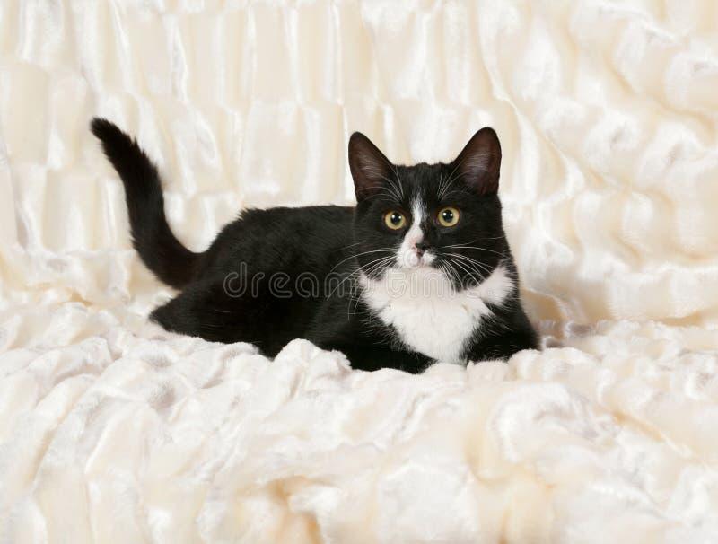 Svartvit katt som ligger på vit fotografering för bildbyråer