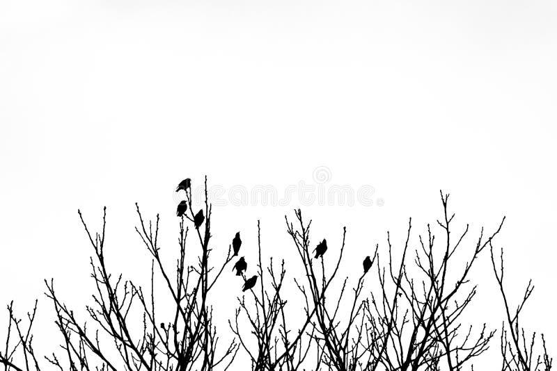 Svartvit kontur av åtta fåglar överst av träd vektor illustrationer