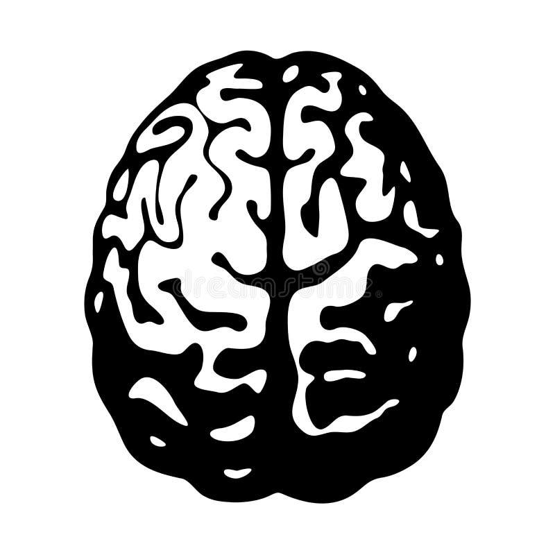 Svartvit mänsklig hjärna i bästa sikt stock illustrationer
