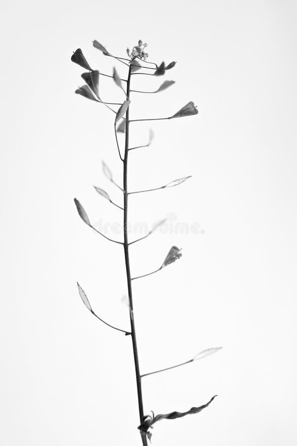 Svartvit macrophoto av växtobjekt med djup av fältet fotografering för bildbyråer