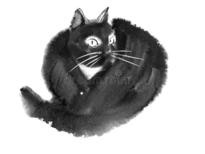 Svartvit päls- katt royaltyfri bild