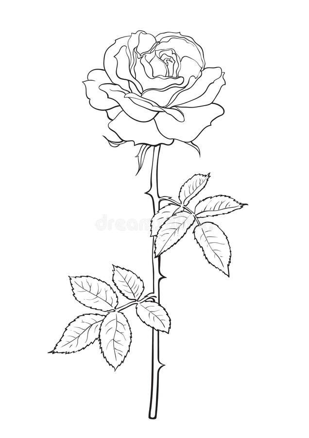 Svartvit rosblomma med sidor och stammen Dekorativ beståndsdel för tatueringen, hälsningkort, bröllopinbjudan Hand stock illustrationer