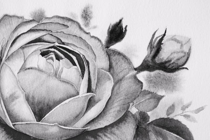 Svartvit rosblomma Vattenfärgmålningar royaltyfri illustrationer