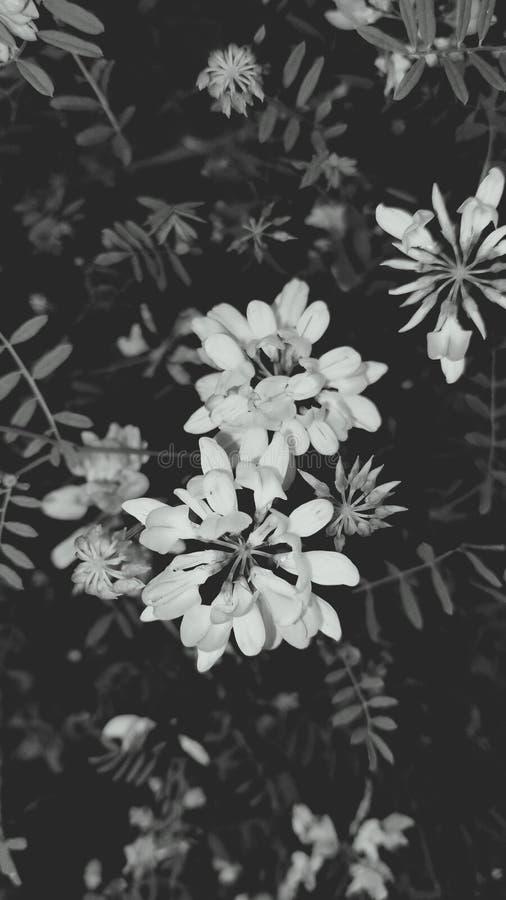 Svartvita blommor fotografering för bildbyråer