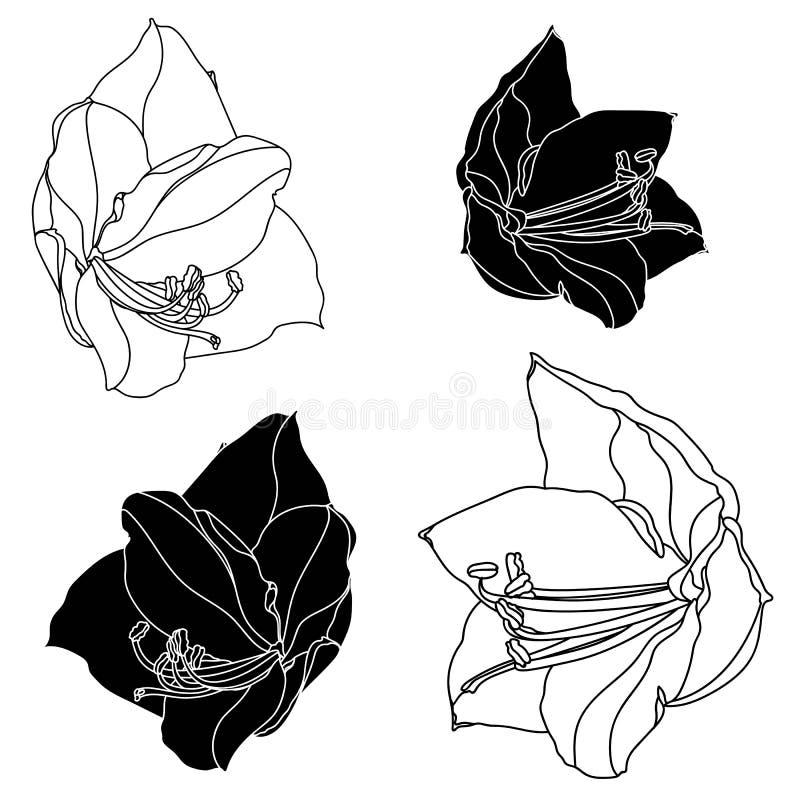 Svartvita blommor uppsättning, designbeståndsdelar för dekorativ amaryllis Kan användas för kort, inbjudningar, baner, affischer, royaltyfri illustrationer