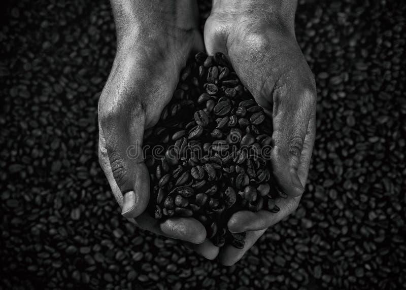 Svartvita handfullkaffebönor fotografering för bildbyråer