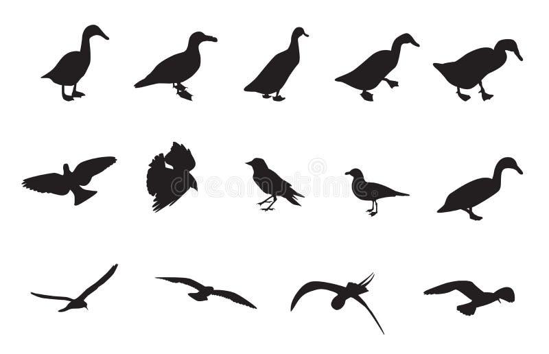 Svartvita konturer av olika fåglar ocks? vektor f?r coreldrawillustration stock illustrationer