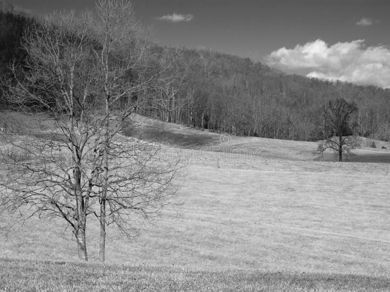 Svartvitt fält arkivbilder