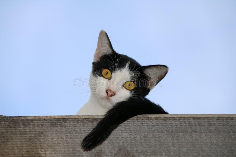 Svartvitt färgsammanträde för katt på bakgrunden för tak och för blå himmel royaltyfria bilder