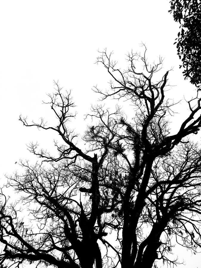 Svartvitt foto av ett tr?d arkivbilder