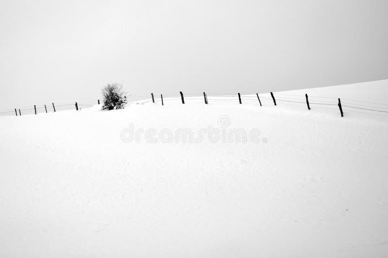 Svartvitt foto av vinterlandskapet arkivbilder