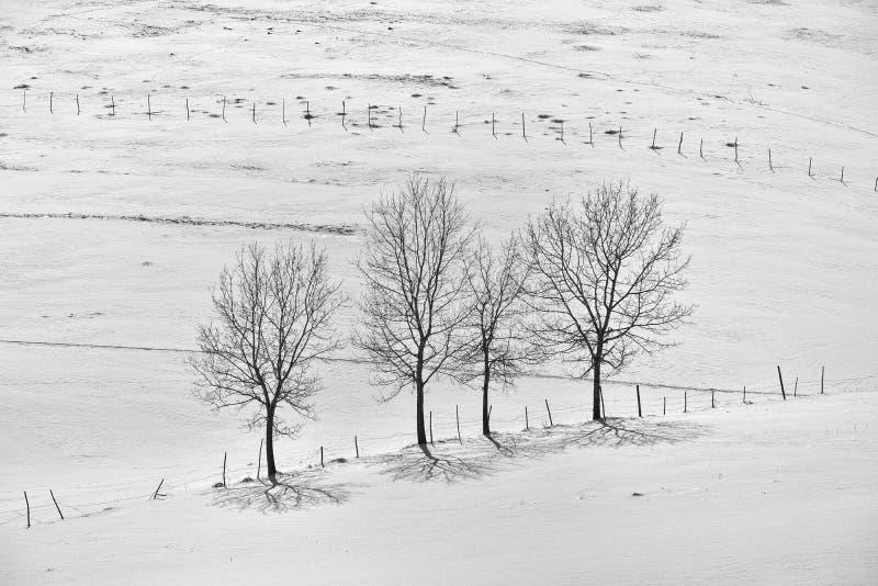 Svartvitt foto av vinterlandskapet med staketet och trädet arkivfoton