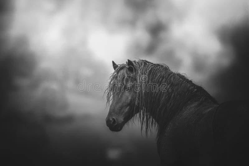 Svartvitt foto för häst arkivbild