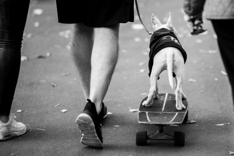 Svartvitt foto från baksida av mannen med hunden på skateboarden royaltyfri fotografi