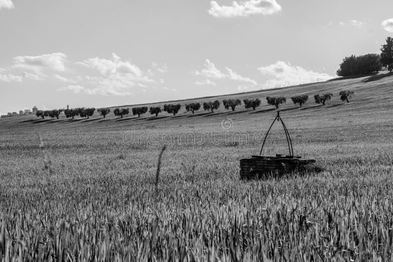 Svartvitt landskap av bygd i den Marche regionen av Italien royaltyfri fotografi
