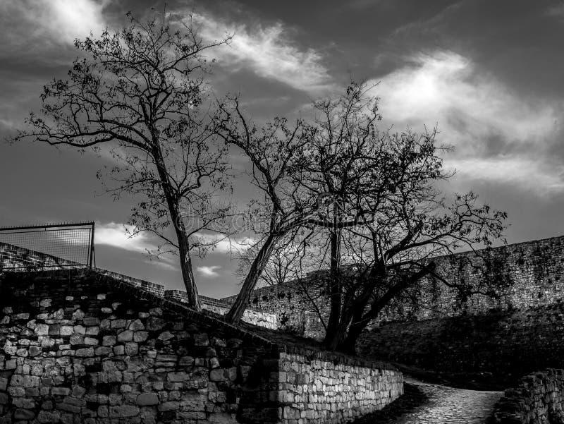 Svartvitt landskap med träd på den Belgrade fästningen royaltyfria bilder