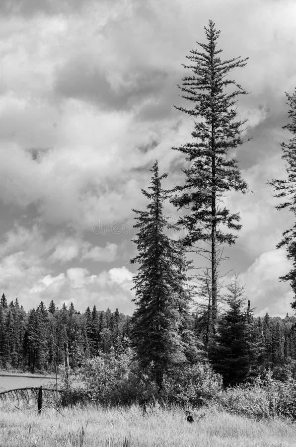 Svartvitt landskap på Duck Mountain Provincial Park arkivfoto
