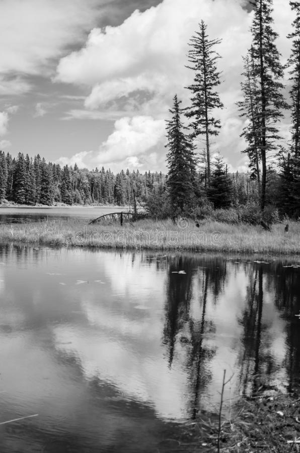 Svartvitt landskap p? Duck Mountain Provincial Park arkivbilder