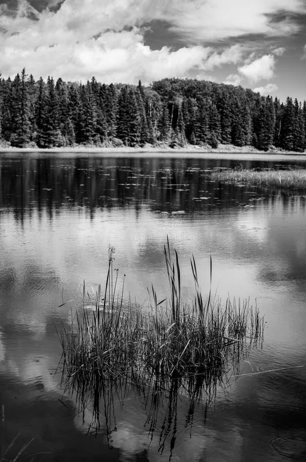 Svartvitt landskap p? Duck Mountain Provincial Park royaltyfria foton