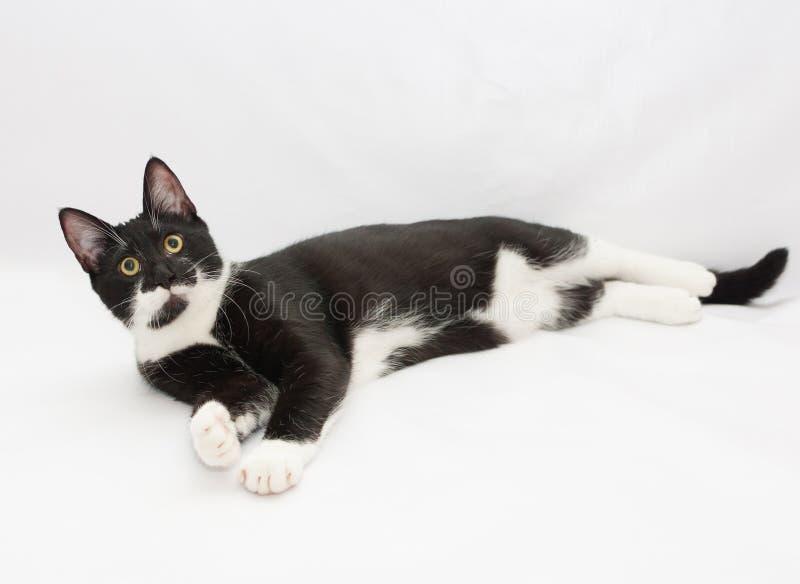 Svartvitt ligga för katt som ut sträcks, lägger benen på ryggen royaltyfri bild