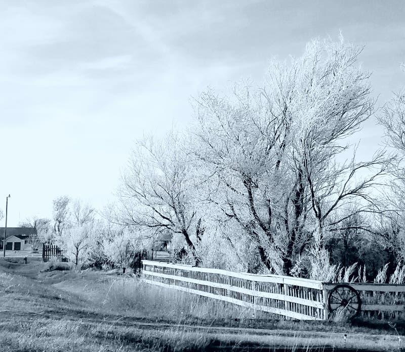 Svartvitt med is över träd royaltyfri fotografi