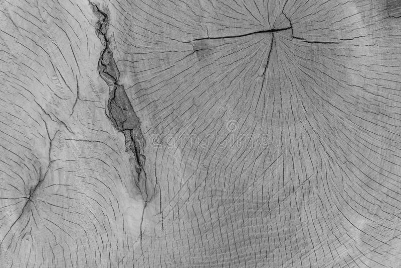 Svartvitt sörja skällbakgrund detail treen arkivfoto