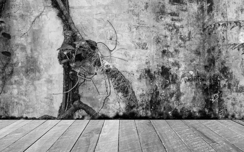 Svartvitt tomt rum med det smutsiga vägg- och murgrönaträdet och trägolvet Tomt utrymme för text och bilder arkivbild