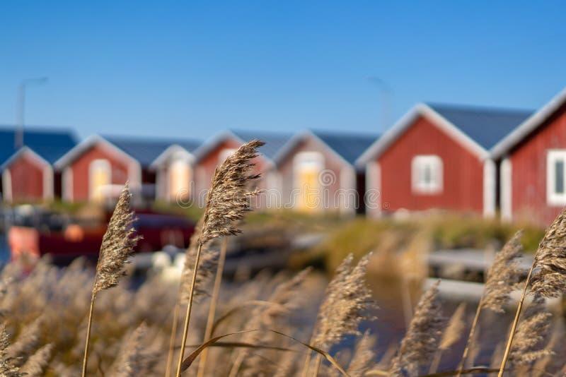Svedjehamn, Finnland - 14. Oktober 2018: Rote Fischereihäuser auf sonnigem Wetter bei Swedjehamn mit Anlage auf dem Vordergrund lizenzfreies stockfoto