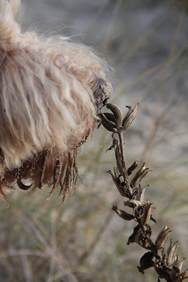 Svegli ed odori i fiori fotografia stock libera da diritti
