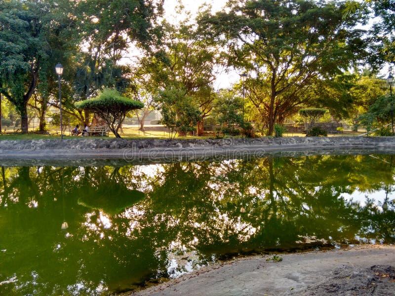 Svegli il lago nell'interesse vivente fotografia stock libera da diritti