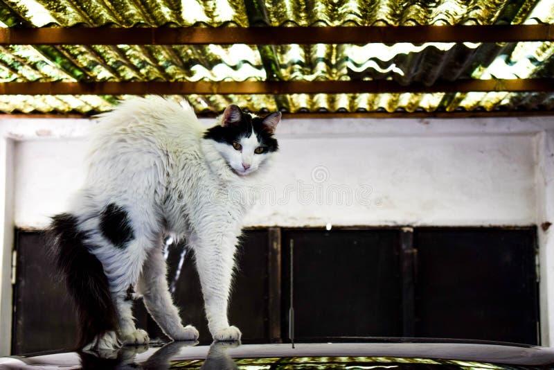 Svegliando dal gatto del pelo fotografie stock
