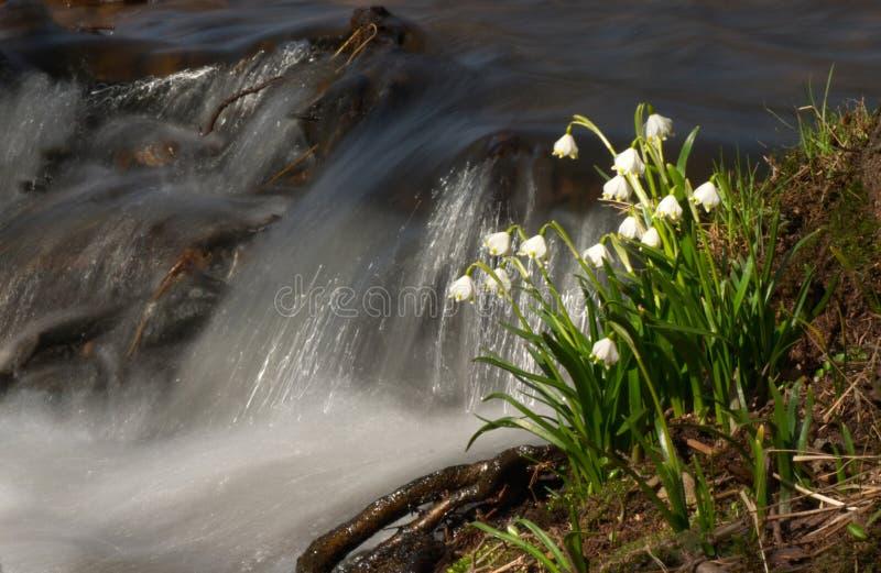 Svegliandosi in primavera fotografia stock libera da diritti