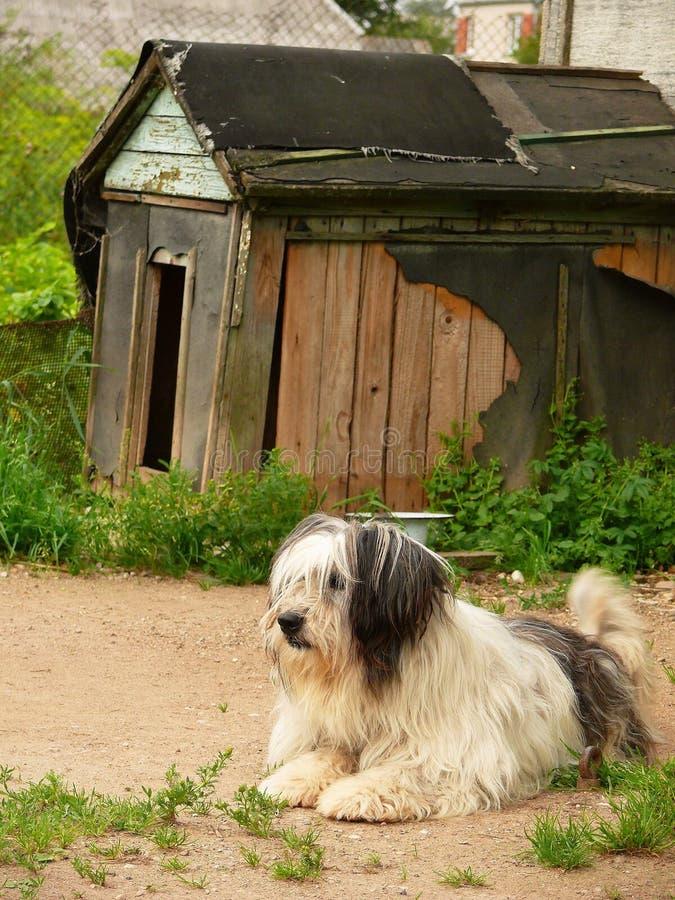 Sveglio, insolito e un buon cane fotografia stock