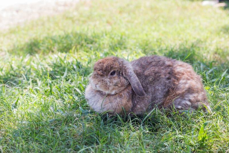 Sveglio poco coniglio su erba verde nel giorno del sole immagine stock