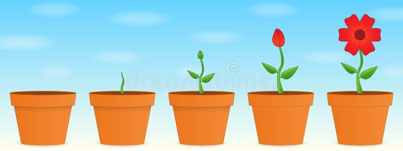 Sviluppo del fiore royalty illustrazione gratis