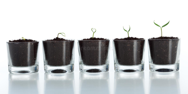 Sviluppo della pianta giovane - sviluppo immagini stock libere da diritti