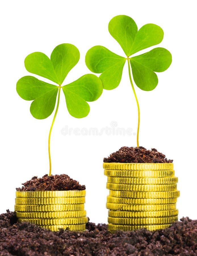Sviluppo di soldi. Monete dorate in terreno con il cloverleaf immagine stock libera da diritti