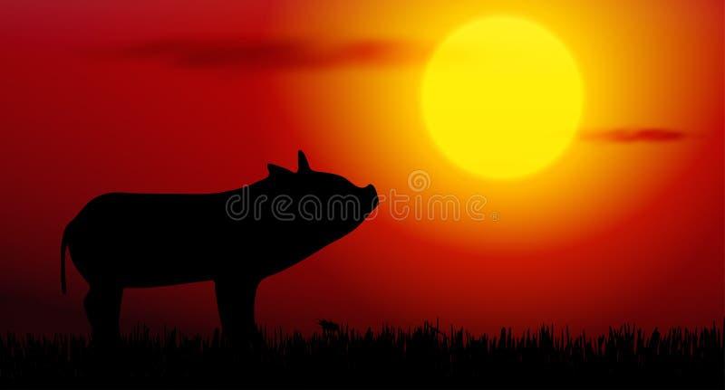 svin på solnedgång vektor illustrationer