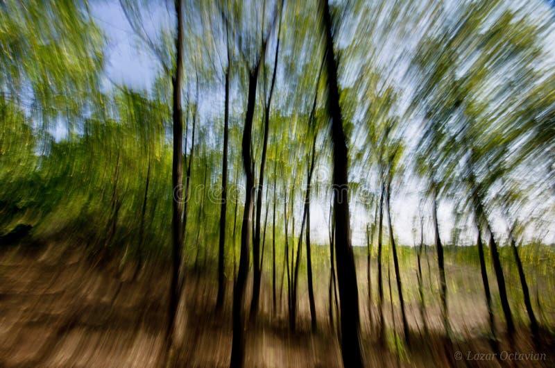 Svindelzoomeffekt i skog arkivbild