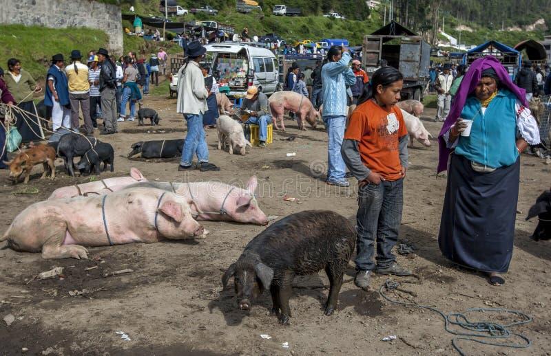 Svinsäljare väntar på kunder på Otavolo den djura marknaden i Ecuador i Sydamerika fotografering för bildbyråer